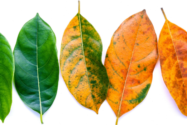 Natuur als inspiratiebron: seizoenen in je leven